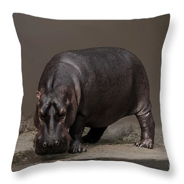 Mr. Hippo Throw Pillow by Charuhas Images