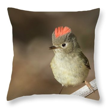 Throw Pillow featuring the photograph Mr Kinglet  by Mircea Costina Photography