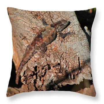 Mr. Lizard - Tucson Arizona Throw Pillow by Donna Greene