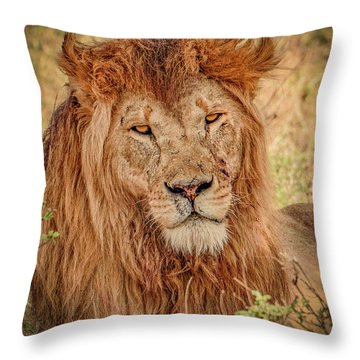 Mr. Majestic  Throw Pillow by Janis Knight