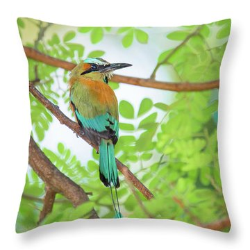 Mr Mot Mot Throw Pillow