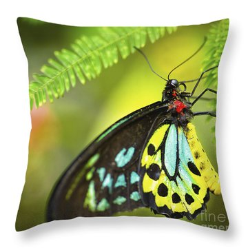 Mr. Richmond Birdwing Throw Pillow