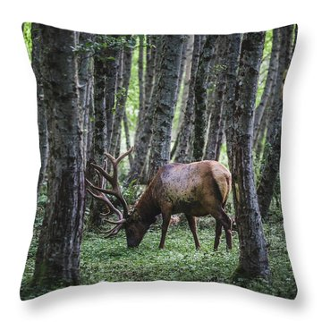 Mr Roosevelt Throw Pillow