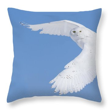 Mr Snowy Owl Throw Pillow