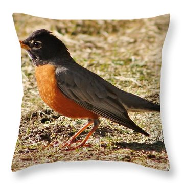 Throw Pillow featuring the photograph Mr. Spring Robin by Al Fritz