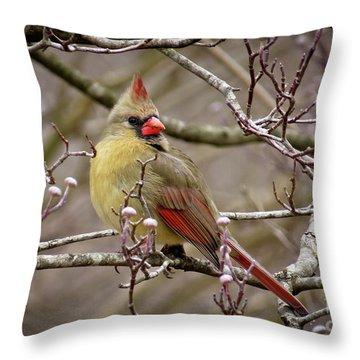 Throw Pillow featuring the photograph Mrs Cardinal II by Douglas Stucky