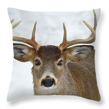 Throw Pillow featuring the photograph Mug Shot by Tony Beck