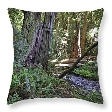 Muir Woods Beauty Throw Pillow