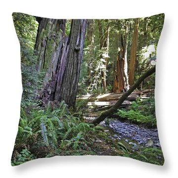 Muir Woods Beauty Throw Pillow