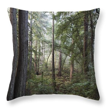 Throw Pillow featuring the photograph Muir Woods Tranquility by Sandra Bronstein