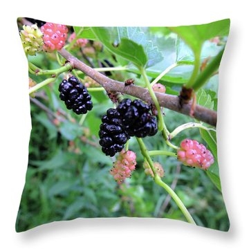 Throw Pillow featuring the photograph Mulberries by Scott Kingery