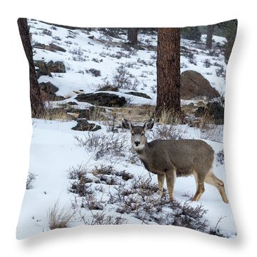 Mule Deer - 8922 Throw Pillow
