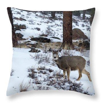 Mule Deer - 8922 Throw Pillow
