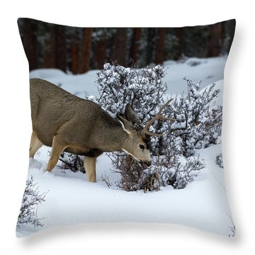 Mule Deer - 9130 Throw Pillow