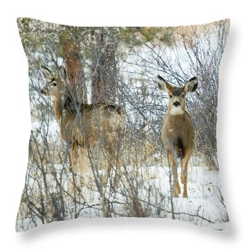 Mule Deer Does In Snow Throw Pillow