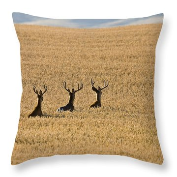 Mule Deer In Wheat Field Throw Pillow
