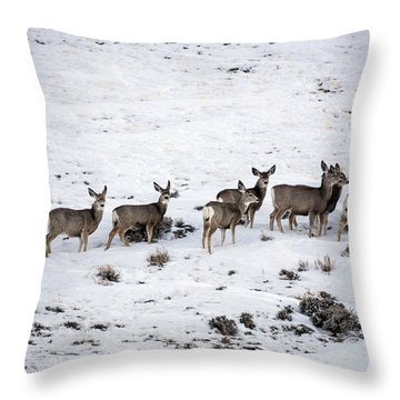 Muledeer Gather On A Snowy Hillside In Sweetwater County In Wyoming Throw Pillow