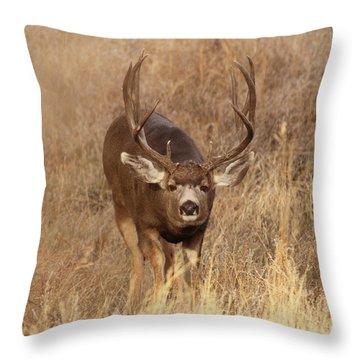 Muledeerbuck1 Throw Pillow