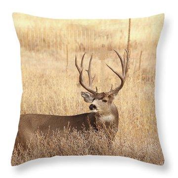 Muledeerbuck2 Throw Pillow