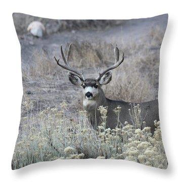 Muledeerbuck5 Throw Pillow