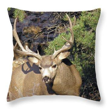 Muledeerbuck6 Throw Pillow