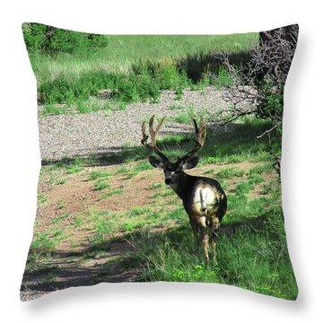 Muledeerbuck7 Throw Pillow