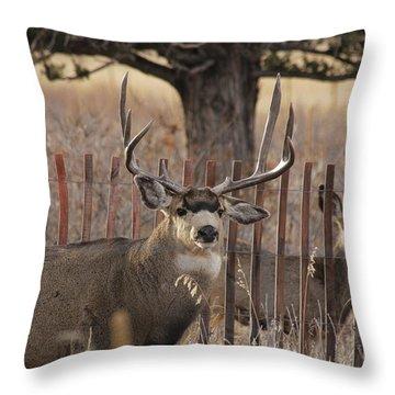Muledeerbuck8 Throw Pillow