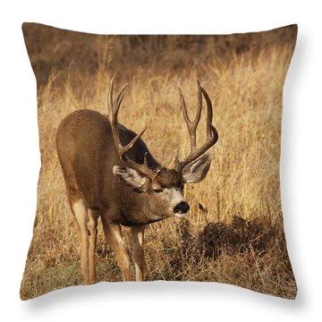 Muledeerbuck9 Throw Pillow
