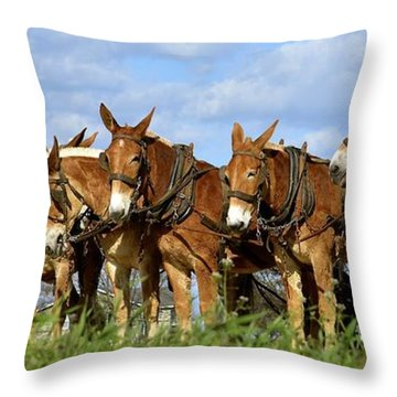 Mules Unhitching Throw Pillow