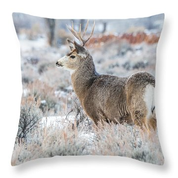 Throw Pillow featuring the photograph Muley Buck In Winter by Yeates Photography