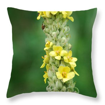 Mullein Throw Pillow