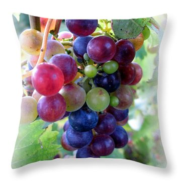 Multicolor Grapes Throw Pillow by Carol Sweetwood
