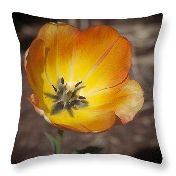 Multihued Throw Pillow