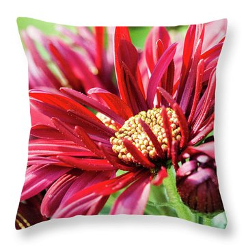 Mum's The Word IIi Throw Pillow