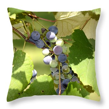 Muscadine Grapes Throw Pillow