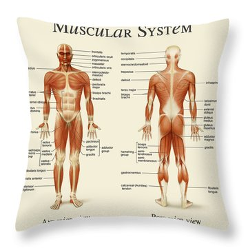 Throw Pillow featuring the photograph Muscular System by Gina Dsgn