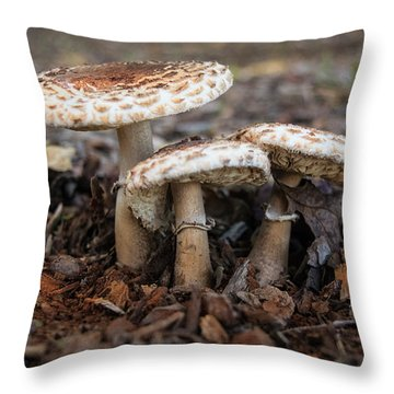 Throw Pillow featuring the photograph Mushroom Trio Macrolepiota Procera by Frank Wilson