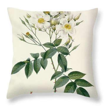 Musk Rose Throw Pillow by Pierre Joseph Redoute