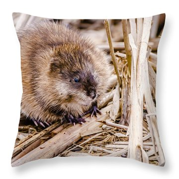 Muskrat Ball Throw Pillow