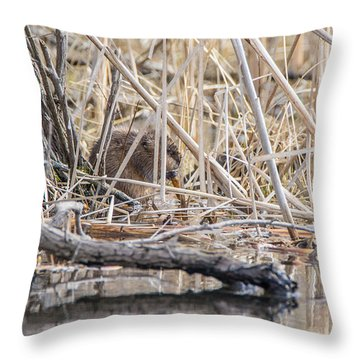Muskrat Eating A Fish Throw Pillow