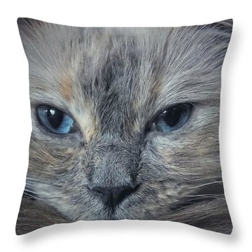 Mustachioed Cat Throw Pillow by Karen Stahlros
