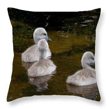 Mute Swan Babes Throw Pillow
