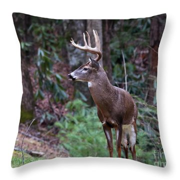 Throw Pillow featuring the photograph My Best Side by Douglas Stucky