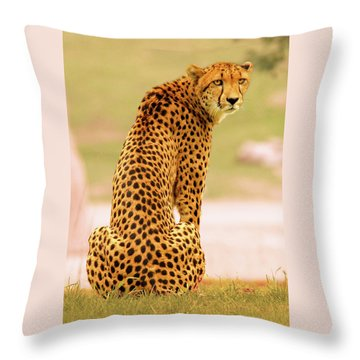 Throw Pillow featuring the photograph My Cheetah by Howard Bagley