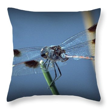 My Favorite Dragonfly Throw Pillow