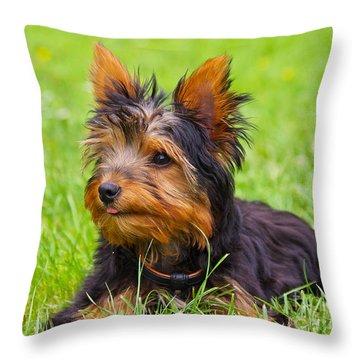 My Little Dog Throw Pillow