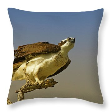 Throw Pillow featuring the photograph My Pose For You by Deborah Benoit