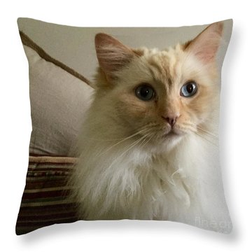 My Ragdoll Honey Early Morning A Spring 2015 Throw Pillow by Patricia E Sundik