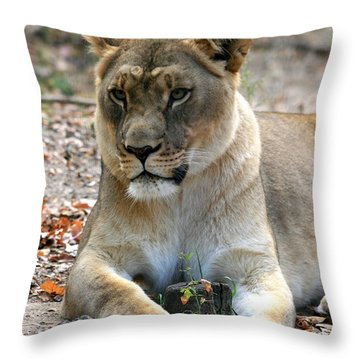 My Stump - You Shall Not Have It Throw Pillow
