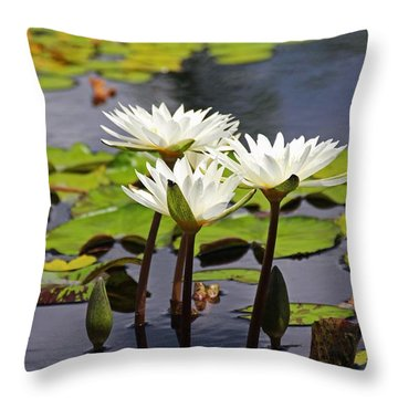 Throw Pillow featuring the photograph My Sweetest Madness by Michiale Schneider